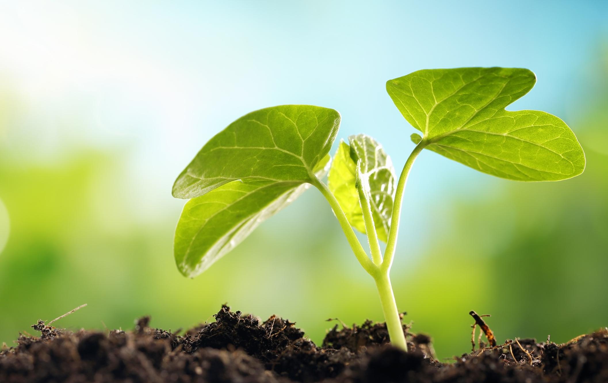 pflanzen-jung